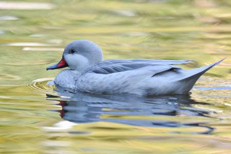 Little duck swimming on green lake