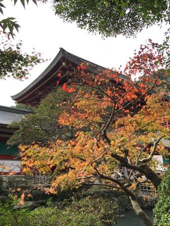 saga: Maple leaf in autumn Stock Photo