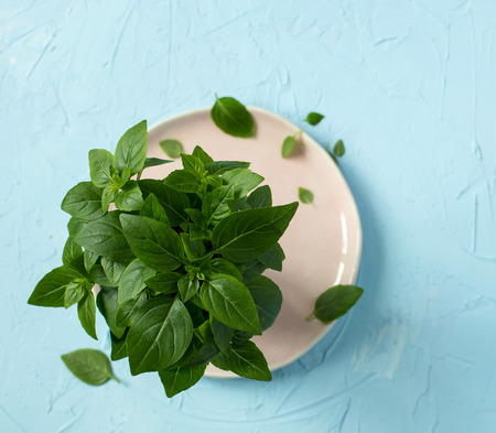 Green basil shot from above on a light blue background