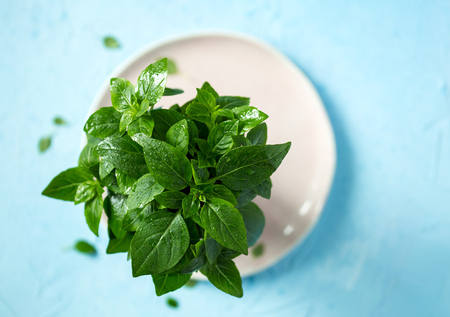 Fresh green basil leaves sprinkled with water