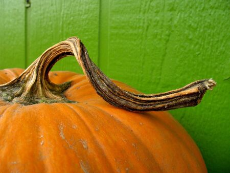 gourds: Close shot of a bright orange pumpkin against a green wall