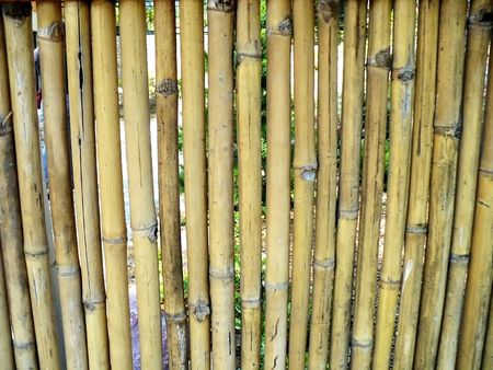 Yellow-green bamboo fence with small gaps between individual sections Banco de Imagens
