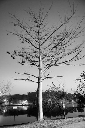 vertically: Tree with a few leaves left near a lake with houses around it. Black and white. Vertically framed photograph