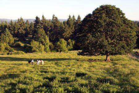 Twee mensen in een veld van gras en bomen praten terwijl op hun paarden. - Horizontaal ingelijst