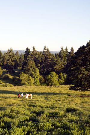 Twee mensen op een gebied van gras en bomen praten terwijl op hun paarden. - Verticaal framed
