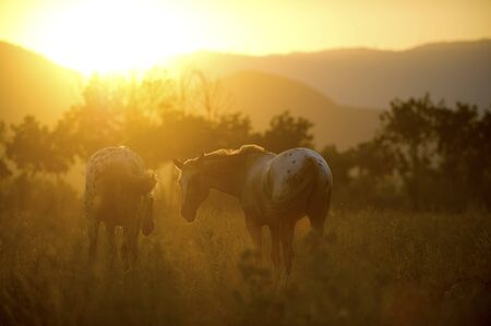 Horses graze freely in the nature
