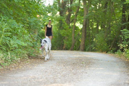 Dog in the foreground and blurred woman walking in the street between the nature photo