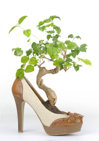 Bonsai in womans shoe with wooden heel