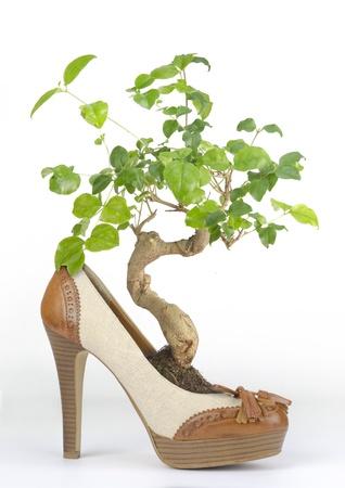 Bonsai in woman's shoe with wooden heel Imagens
