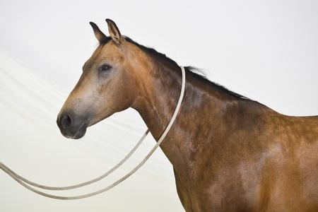 Horse posing at a photo studio