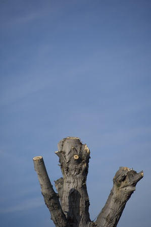 Strains - tree branches cut Stock Photo