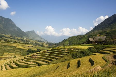 This photo is from Sapa, Vietnam.  Sapa is a top tourist destination in Vietnam.  People can trek and stay at the homes of people from different minority tribes.  The terraces are used to grow rice.  The golden colour shows that its harvest time. Stock Photo