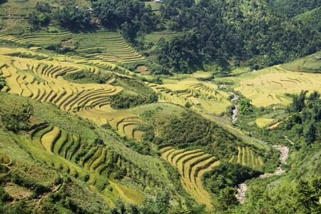 This photo is from Sapa, Vietnam.  The terraces are used to grow rice.  The golden colour shows that its harvest time. photo