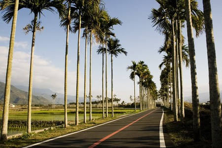 A typical Asian landscape.  Palm trees form orderly patterns, rising about rice paddies.  Mountains in the background photo