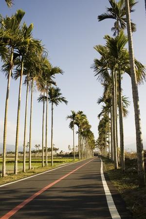 ordelijk: Een typisch Aziatische landschap. Palmbomen vorm geordende patronen, stijgende over rijstvelden. Bergen op de achtergrond