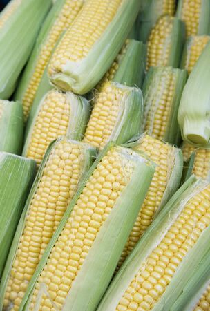 Corn or maize, on display. Corn has many uses such as food, feed for animals and biofuels. Standard-Bild