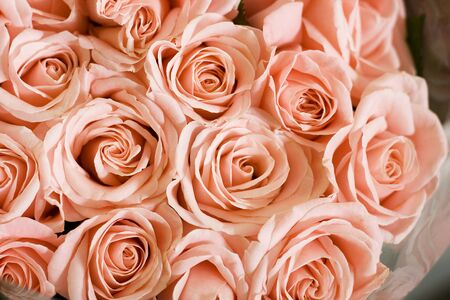 A pink peachy bunch of roses.  photo