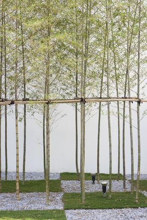 Bamboo growing from squares of grass and gravel.  This is a modern garden in the far East. Stock Photo