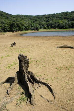 receded: A dried out tree trunk and a receding lake, the dried earth also shows that the area is suffering from a drought Stock Photo