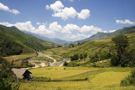 This photo is from Sapa, Vietnam.  The terraces are used to grow rice.  The golden colour shows that it's harvest time.