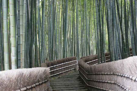 japones bambu: Este ia un bosque de bamb� cerca de Kioto, Jap�n.  Bamb� es una hierba de crecimiento r�pida y formas misteriosas buscando bosques.