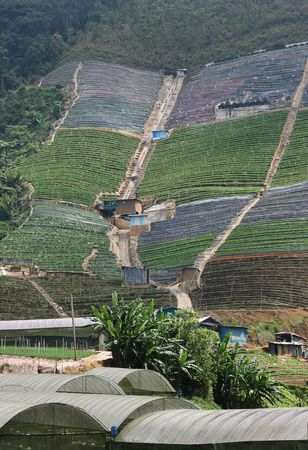 harming: This is intensive farming in the developing world.  This farm is on a steep slope.  Some say this type of farming is harming the environment and leads to landslides etc. Stock Photo