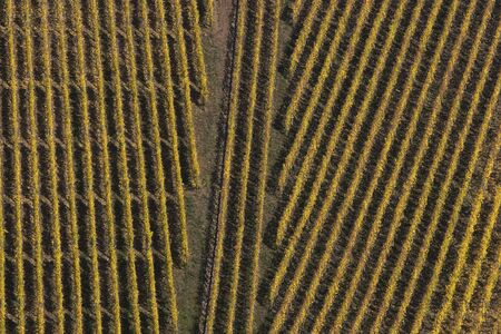 Geometric shapes in a vineyard, vineyard landscape in the Mosel Valley, Germany photo