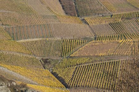 Vineyard landscape in the Mosel Valley, Germany Stock Photo - 12928490