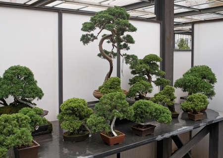 shop for: Assorted Bonsai trees in shop for sale Stock Photo