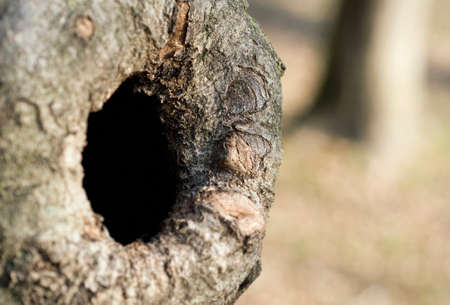 knothole: knothole in a tree trunk
