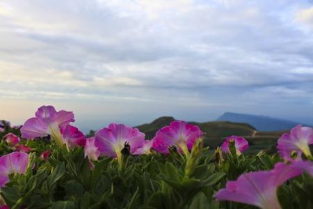 Petunia flowers on sky Mountain view Stock Photo - 8755637