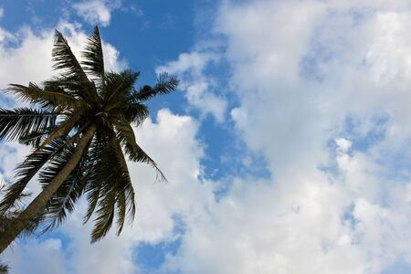 Palm tree with blue sky background  Stock Photo