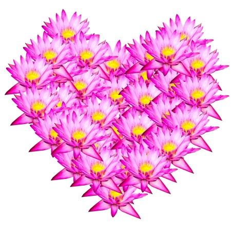 Pink lotus Heart shape on white background   photo