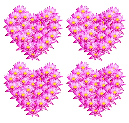 Pink lotus Heart shape on white background   photo