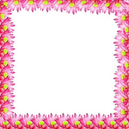 pink lotus for picture frame background  photo