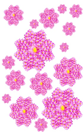 Lotus flowers background