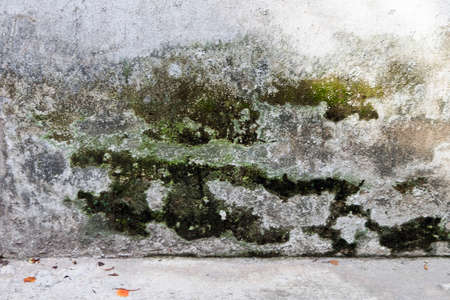 grunge cement wall background Stock Photo