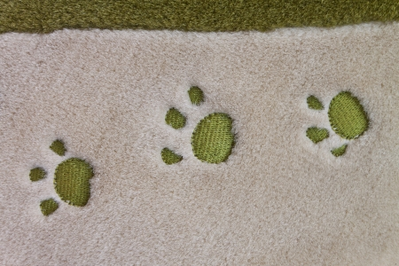 dog paw prints  photo
