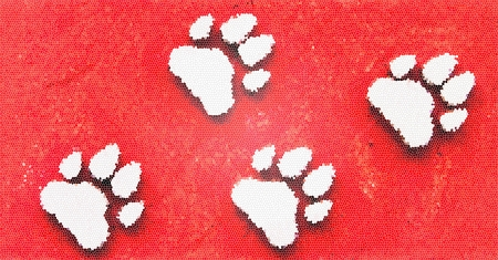 Dog s Footprints Seamless Pattern  Stock Photo - 15234958