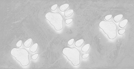 Dog s Footprints Seamless Pattern Stock Photo - 15234951