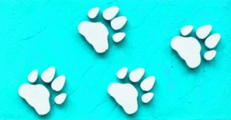 bear paw: paw print  Stock Photo