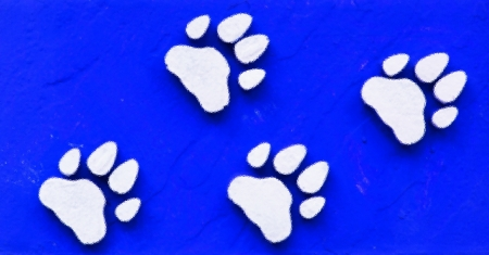 Dog s Footprints Seamless Pattern  photo