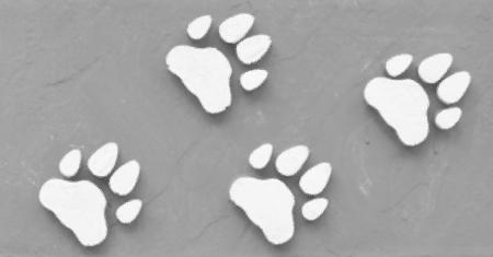 Dog s Footprints Seamless Pattern Stock Photo - 15235000