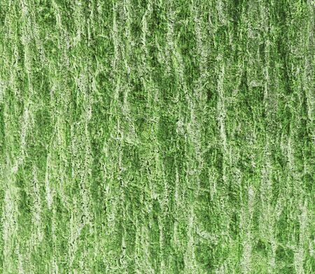 Grunge green background Stock Photo - 17173375
