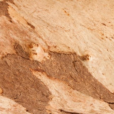 wooden texture, grain background photo