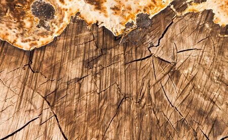sawed: sawed wooden texture, close up with texture Stock Photo