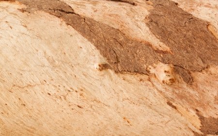 Wooden texture background photo