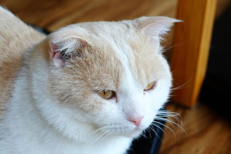 curios: Cat looking out the window in home, close up,