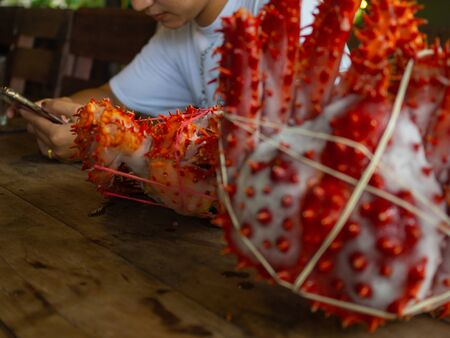 woman with two king crabs Alaska frozen ready on wood table for cooking.