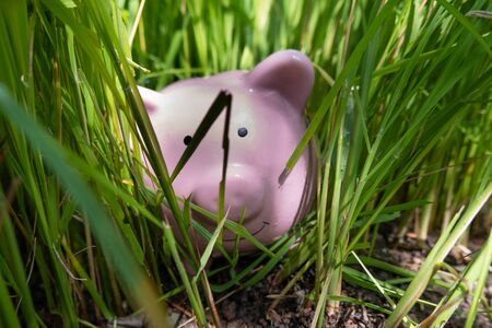 Pink piggy bank Hidden in the grass step up success your own saving way for retirement concept.